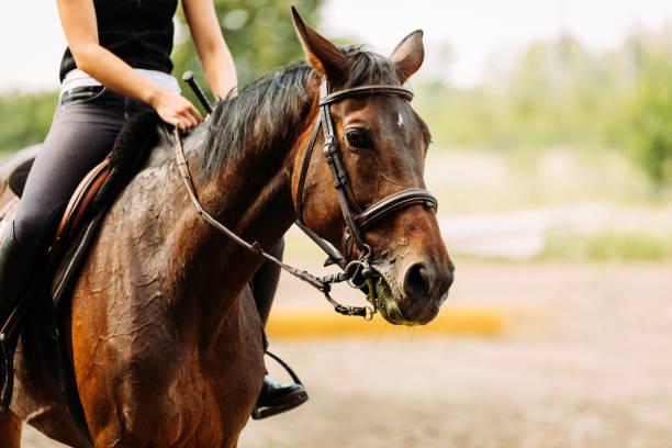 馬に乗って若いきれいな女の子の画像 - 乗馬 ストックフォトと画像
