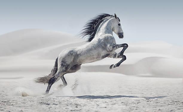 foto di presentare il galloping cavallo bianco - fauna selvatica foto e immagini stock
