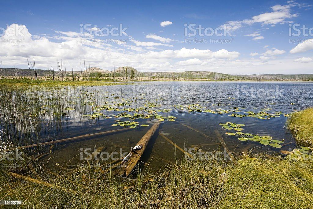 Pictureque Lake in Yellowstone royalty-free stock photo