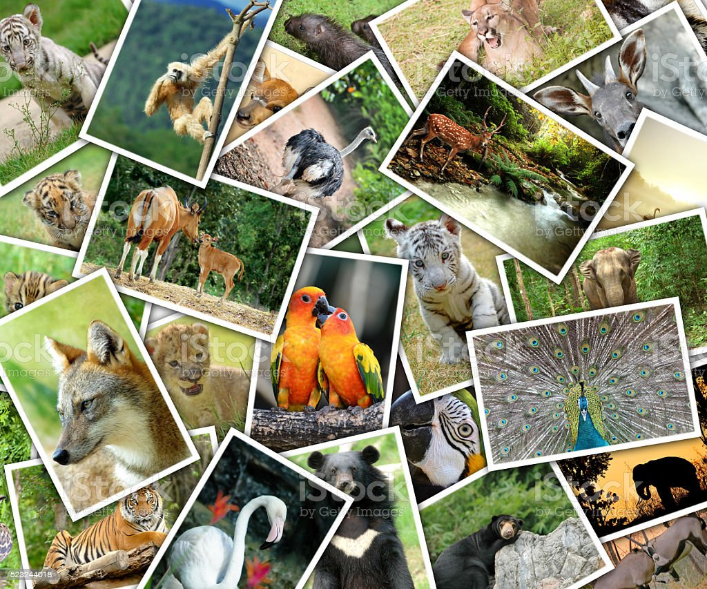 Pictures of animals pile on the table stock photo