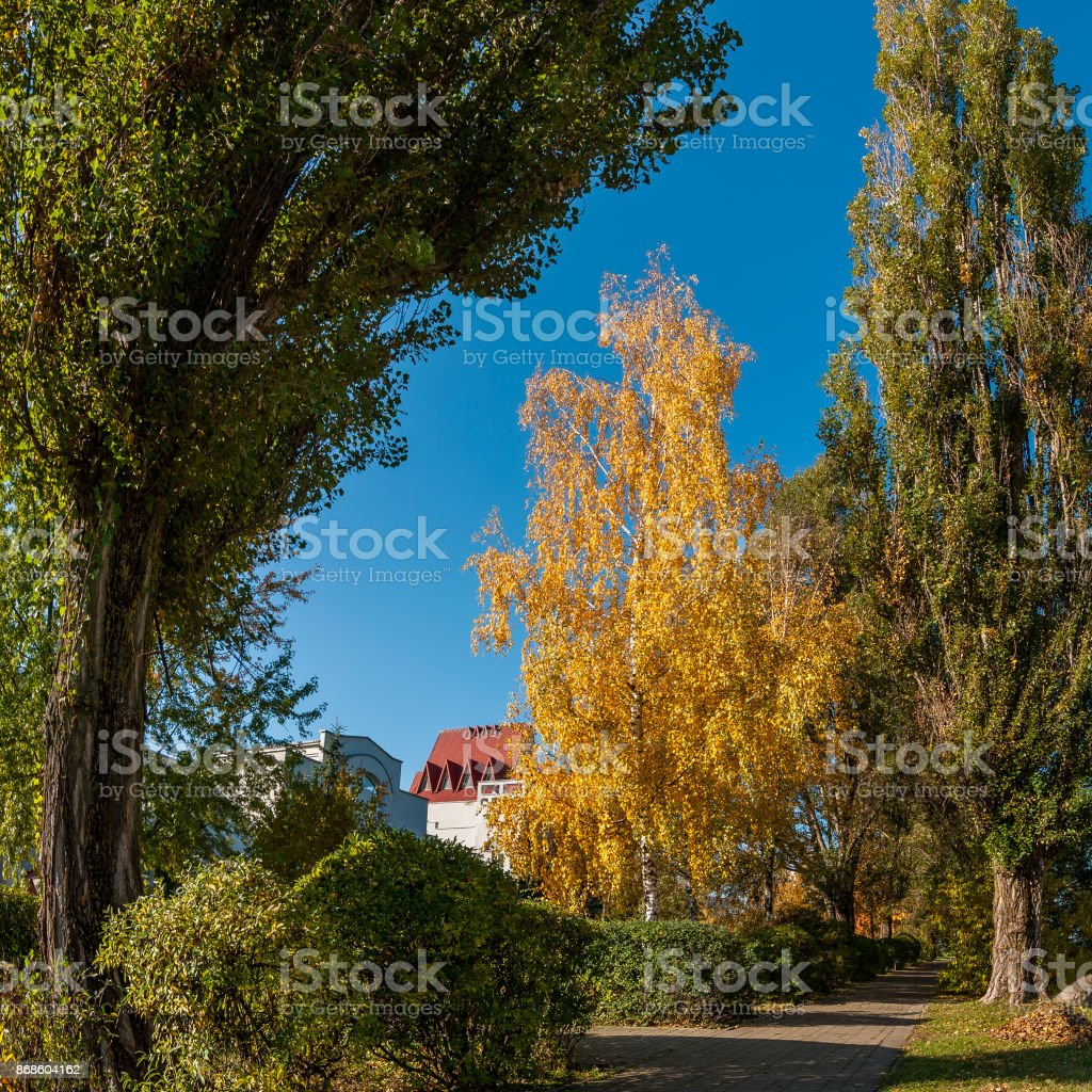 picturesque autumn city pedestrian alley among the tall beautiful trees under the clear blue sky stock photo