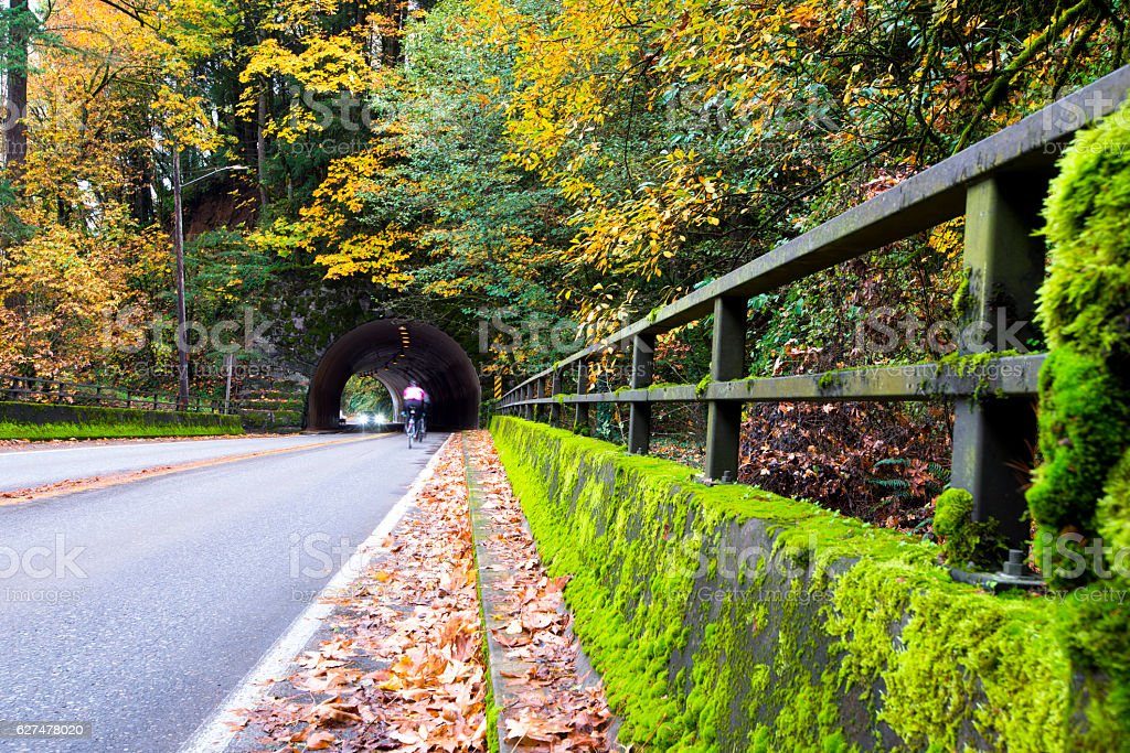 Picturesque autumn road with tunnel in yellowed forest stock photo