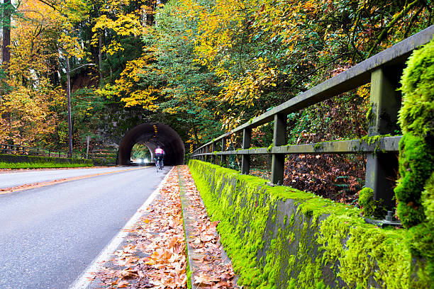 Picturesque autumn road with tunnel in yellowed forest – Foto