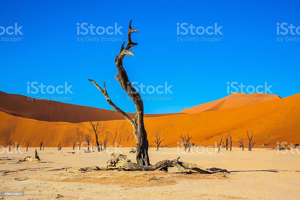 Picturesque dry trees stock photo