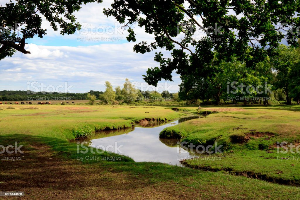 Picturesque English countryside in the New Forest stock photo