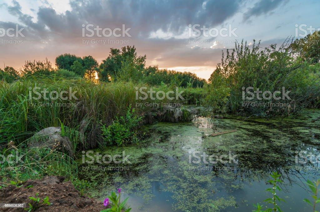 noite pitoresca paisagem de verão. Bela vista da costa até o lago pantanoso coberto - foto de acervo