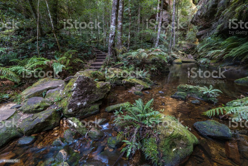Picturesque forest pond along Grand Canyon Walking Track, Australia stock photo