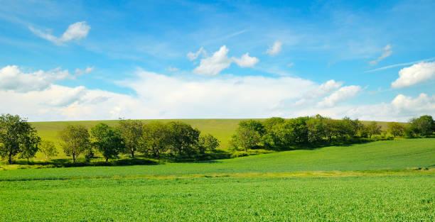 Malerische grüne Wiese und blauer Himmel. – Foto