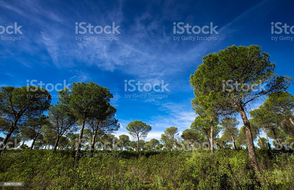 Picturesque Green Trees Against Blue Morning Sky stock photo
