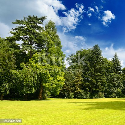 istock Picturesque landscape of bright sunny meadow 1302304836