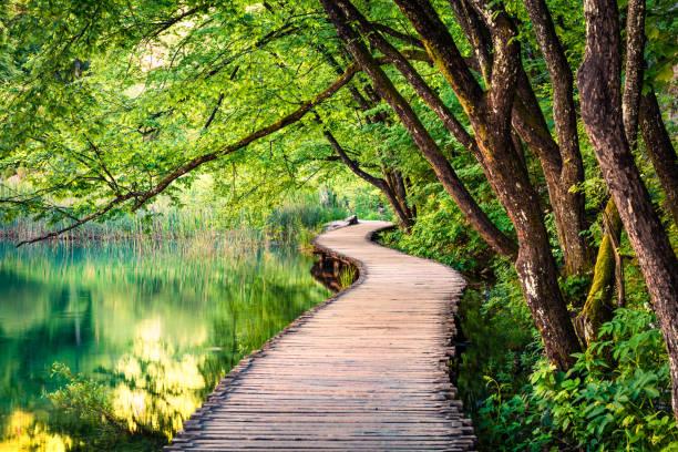 普利特維采國家公園風景如畫的早晨。五顏六色的春天場景的綠色森林與純淨的水湖。克羅地亞、歐洲的偉大鄉村景觀。自然之美概念背景。 - 大自然 個照片及圖片檔