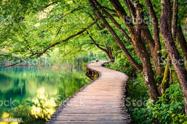 Photo of Picturesque morning in Plitvice National Park. Colorful spring scene of green forest with pure water lake. Great countryside view of Croatia, Europe. Beauty of nature concept background.