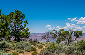 picturesque southern nature of the Grand Canyon National Park. Tropical trees on the edge of the Grand Canyon cliff