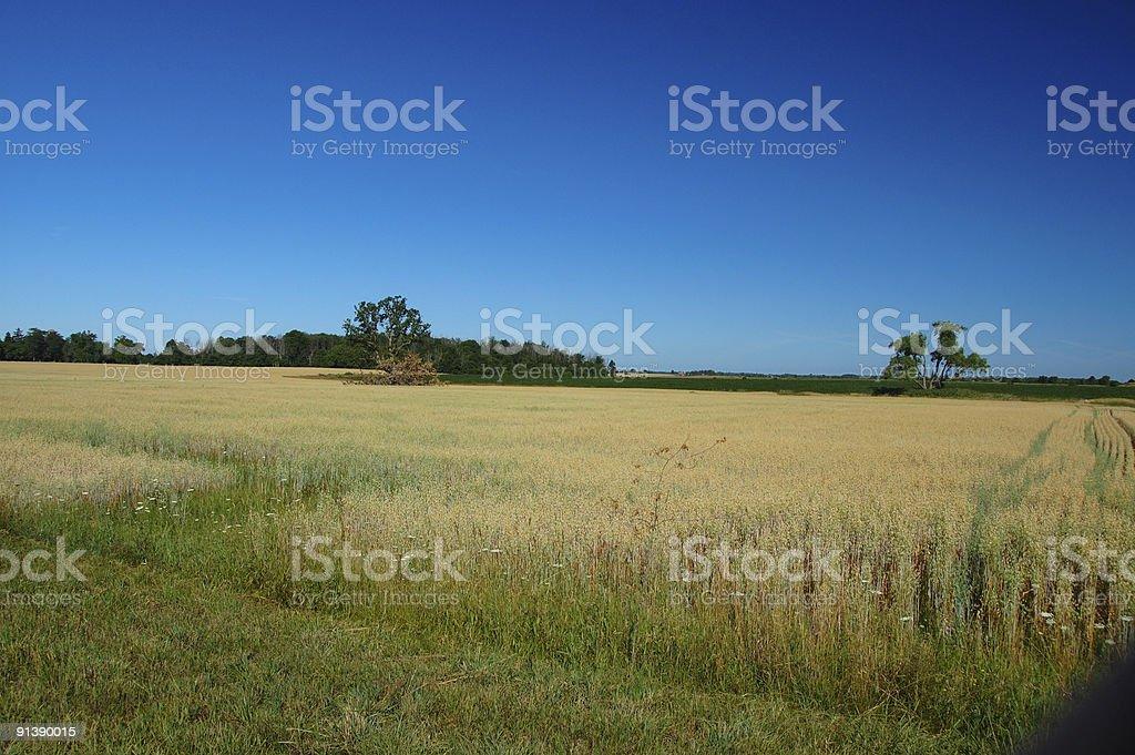 Picturesque Ontario countryside road stock photo