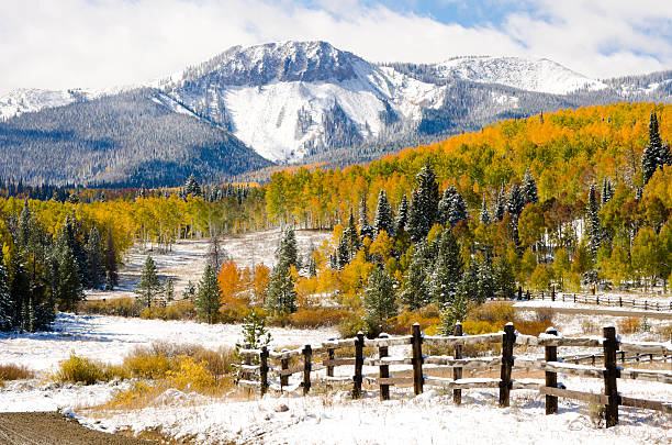 Picturesque scene with fence, fir trees and snowy mountains Early Autumn Aspens and snow. steamboat springs stock pictures, royalty-free photos & images