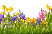 A picturesque spring floral image