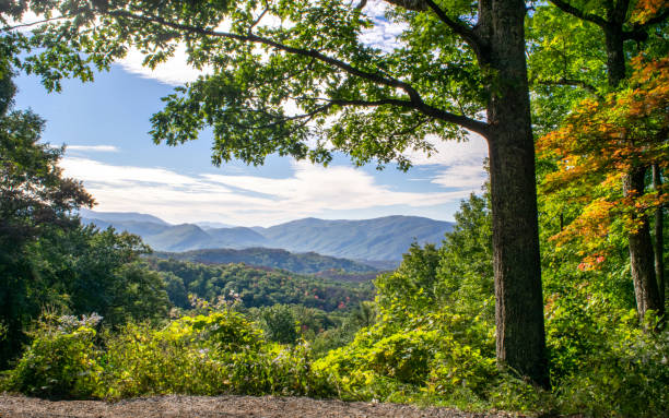 Picturesque View of Great Smoky Mountains National Park Autumn in the Mountains: Overlook in forest, with a stunning view of the Great Smoky Mountains - Great Smoky Mountains National Park (Tennessee, USA) pigeon forge stock pictures, royalty-free photos & images