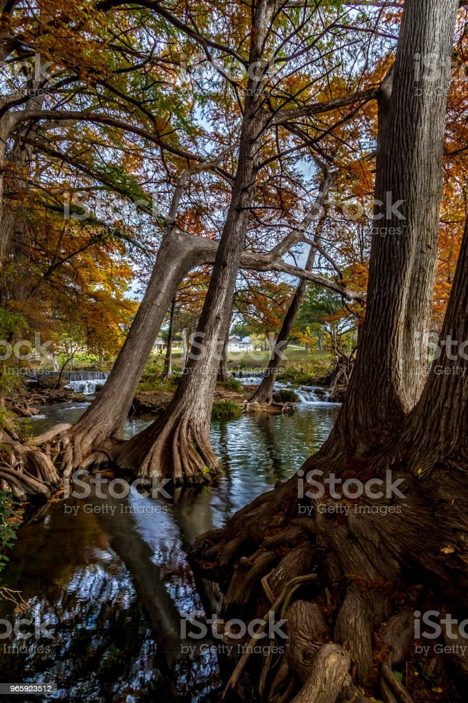 Een pittoreske waterval met heldere Fall gebladerte en statige reus cipressen. - Royalty-free Bald Cypress Tree Stockfoto