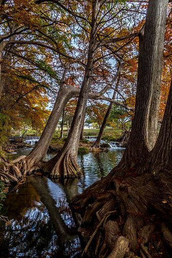 Een Pittoreske Waterval Met Heldere Fall Gebladerte En Statige Reus Cipressen Stockfoto en meer beelden van Bald Cypress Tree