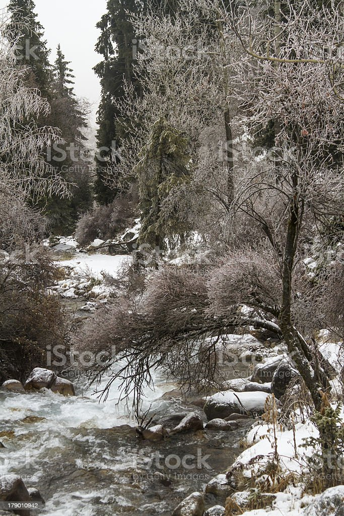 Picturesque winter landscape of frozen trees and river in  Kazakhstan royalty-free stock photo