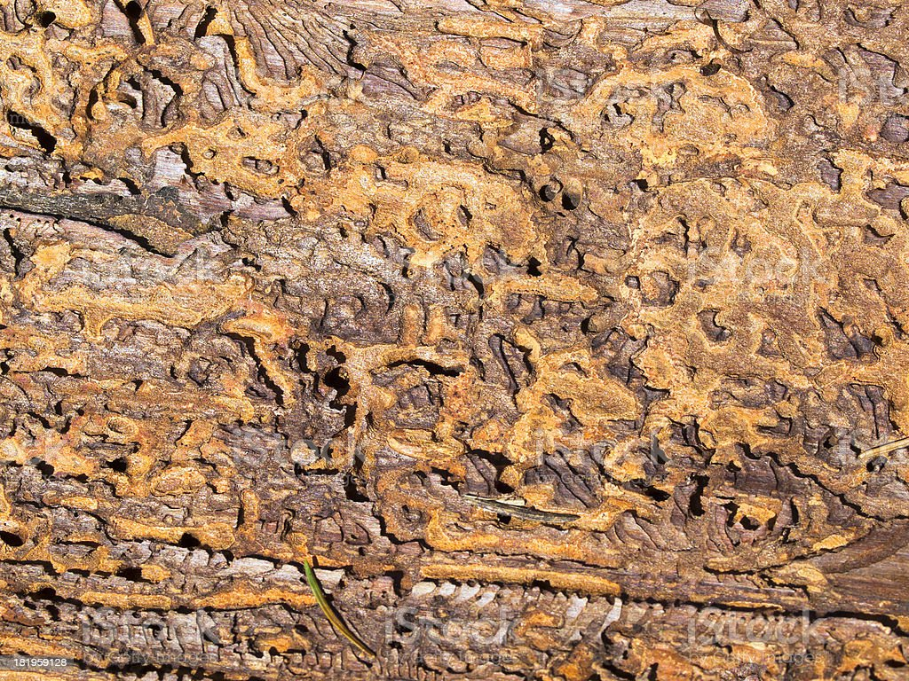 Piece of bark royalty-free stock photo
