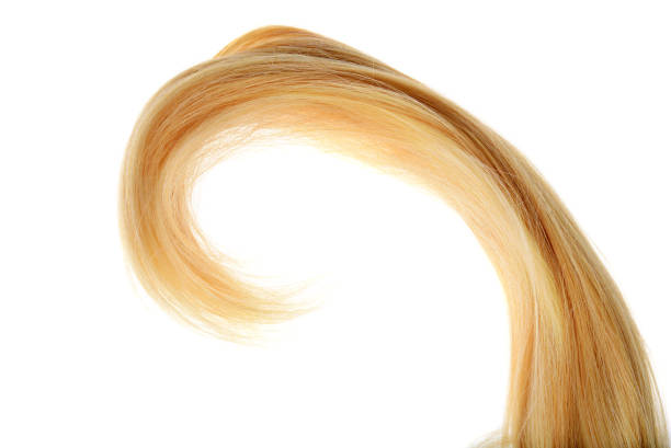 piece of blond hair in a curl isolated piece of blond hair in a curl isolated on a white background highlights hair stock pictures, royalty-free photos & images