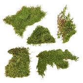 istock piece of green moss 579407952