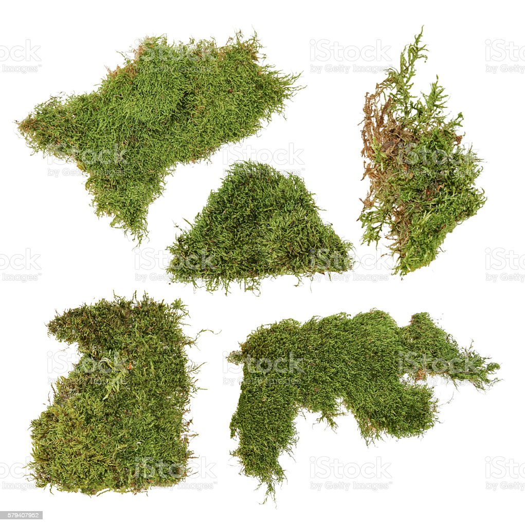 piece of green moss stock photo
