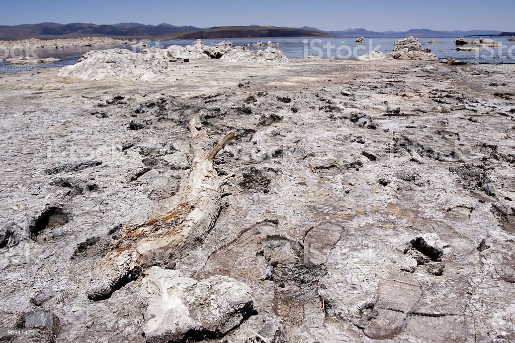 Piece of old wood at the Mono Lake royalty-free stock photo