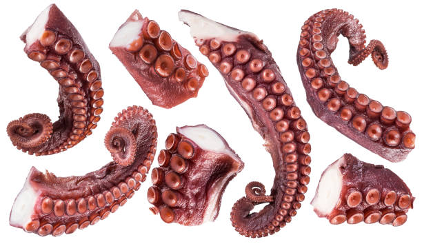 pieces of cooked devil-fish or octopus arms. - octopus stock pictures, royalty-free photos & images