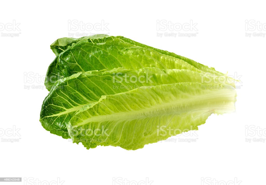 Pieces of fresh green cos lettuce stock photo