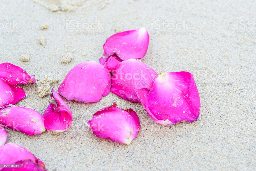 Pieces of rose on the beach stock photo