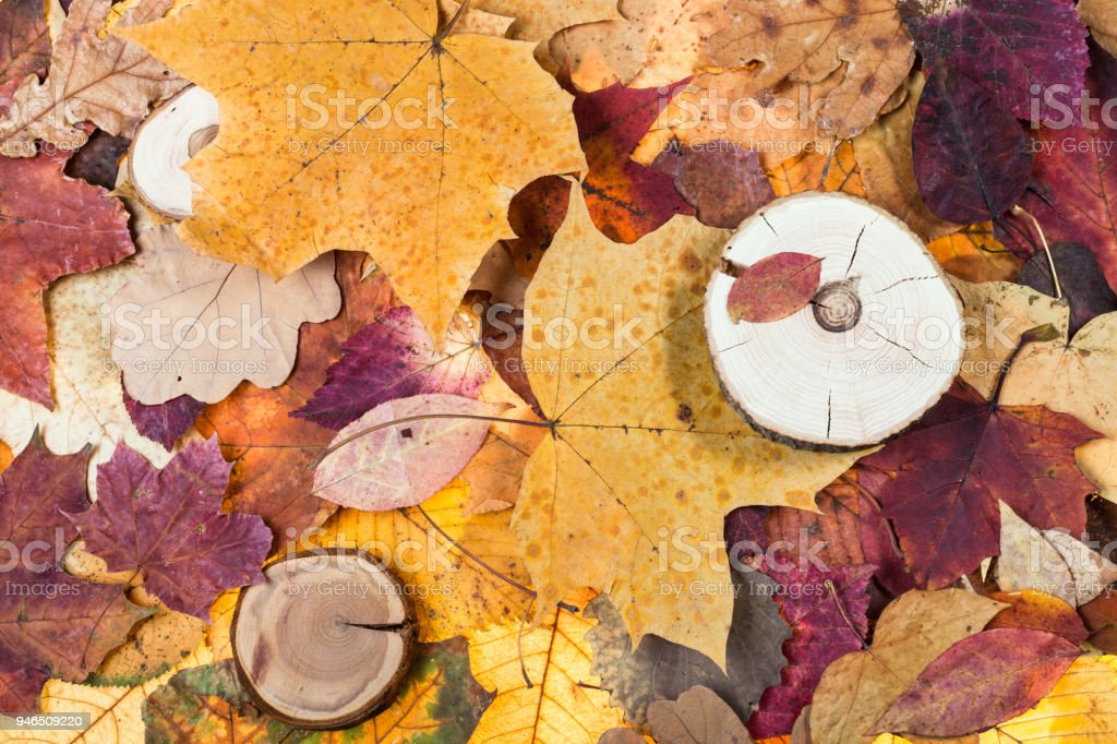 pied fallen autumn leaves and sawed woods stock photo