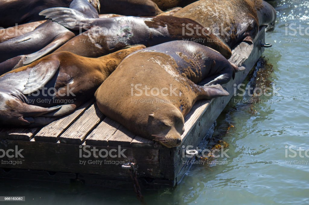 Pier 39 - Royalty-free Beroemde plaats Stockfoto