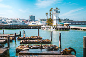 Beautiful view of historic Pier 39 with famous sea lions in summer, Fisherman's Wharf district, central San Francisco, California, USA