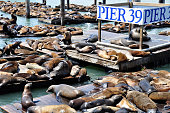 Sea Lions basking in the sun at Pier 39 in San Francisco.