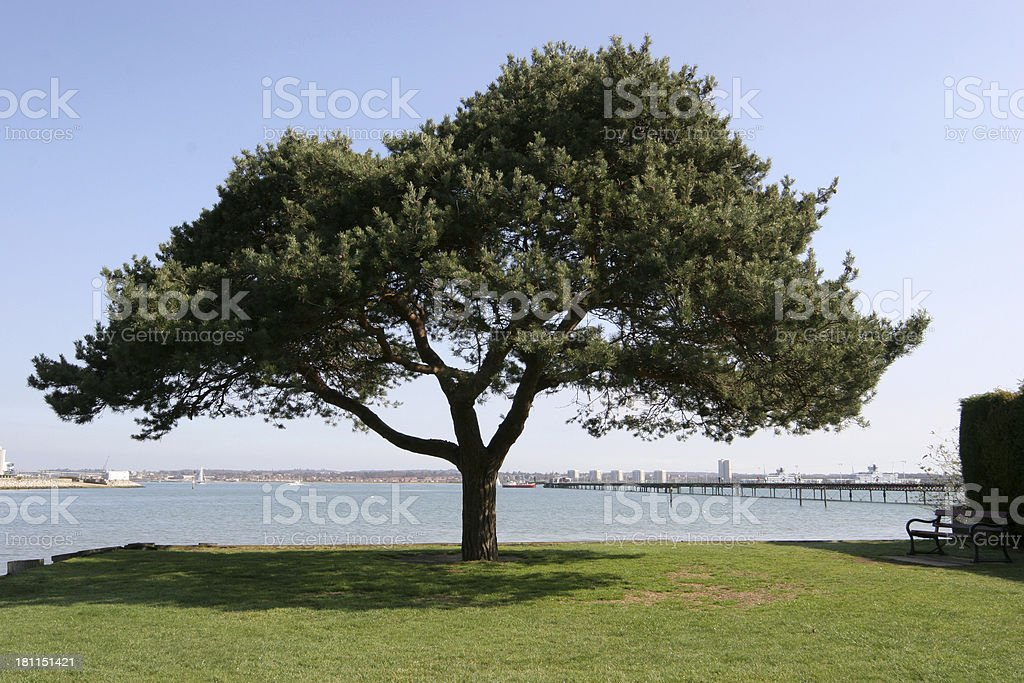 pier and tree stock photo