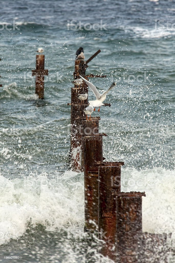 pier in the water royalty-free stock photo