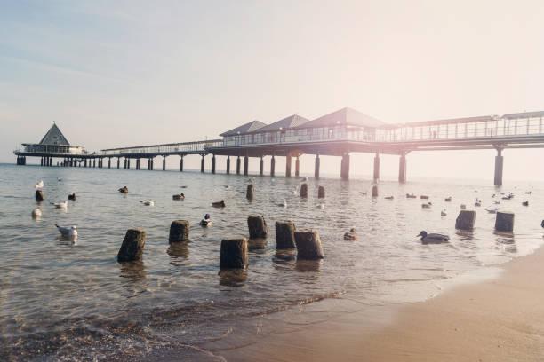 pier von heringsdorf am baltic sea island usedom - usedom stock-fotos und bilder