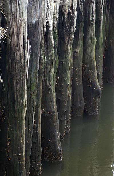 pier pilings in green water stock photo