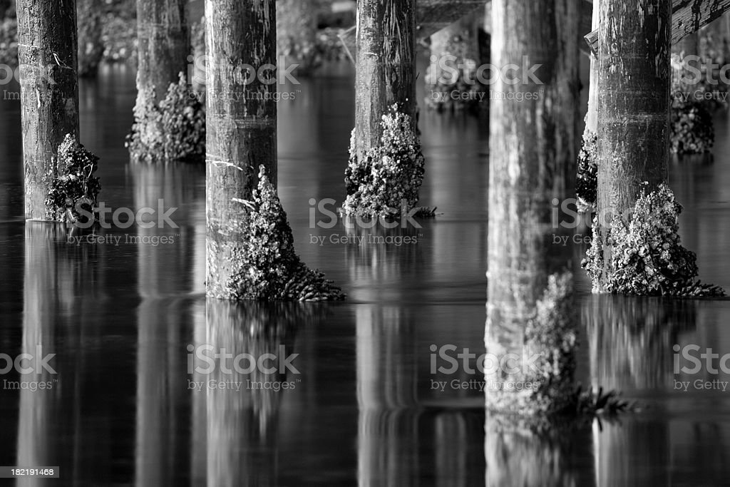 Pier Poles in black and white royalty-free stock photo