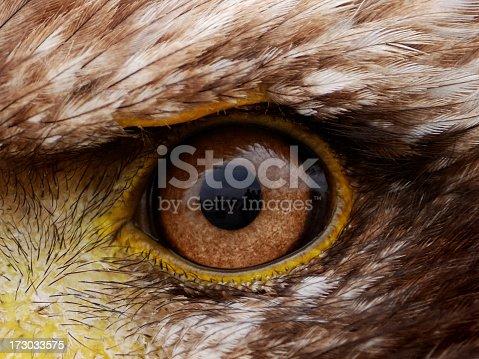 closeup of eagles eye