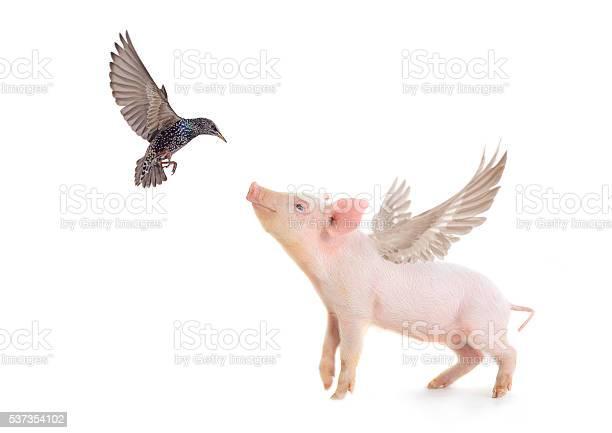Pig and bird picture id537354102?b=1&k=6&m=537354102&s=612x612&h=zo8ljsvqkwuad 7hcwkd7vig2va2ad7omwg2jemq8ki=