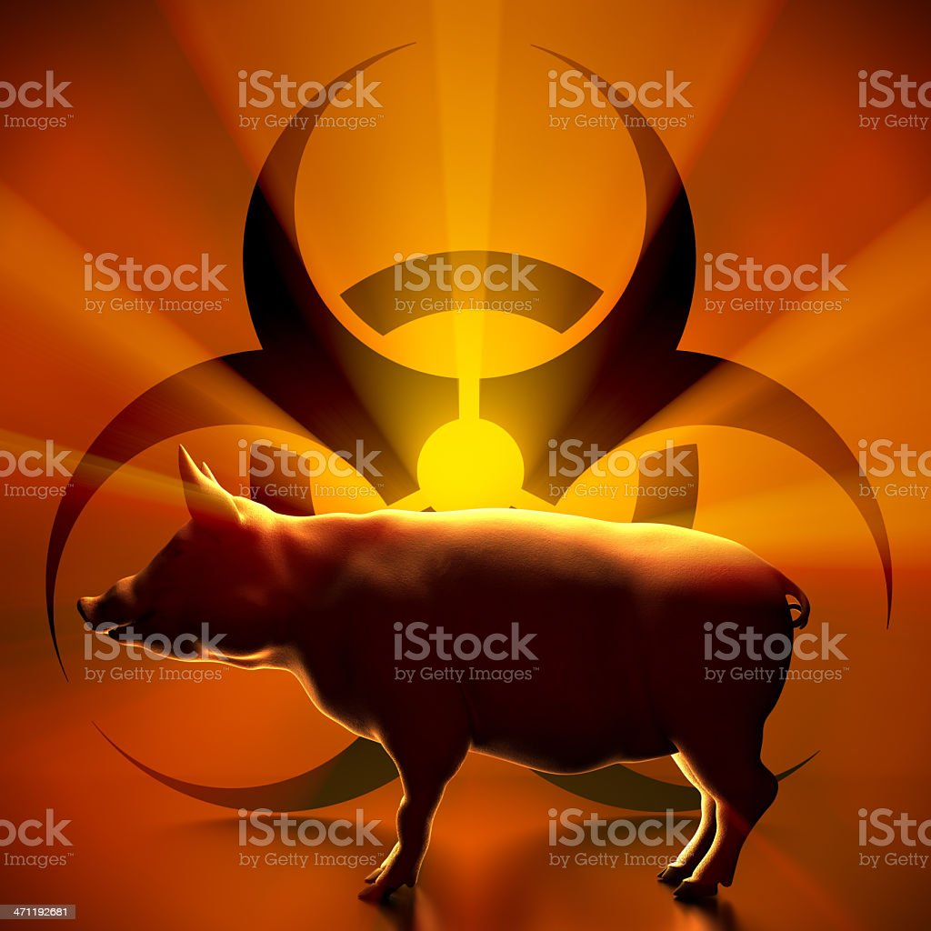 Pig biohazard stock photo