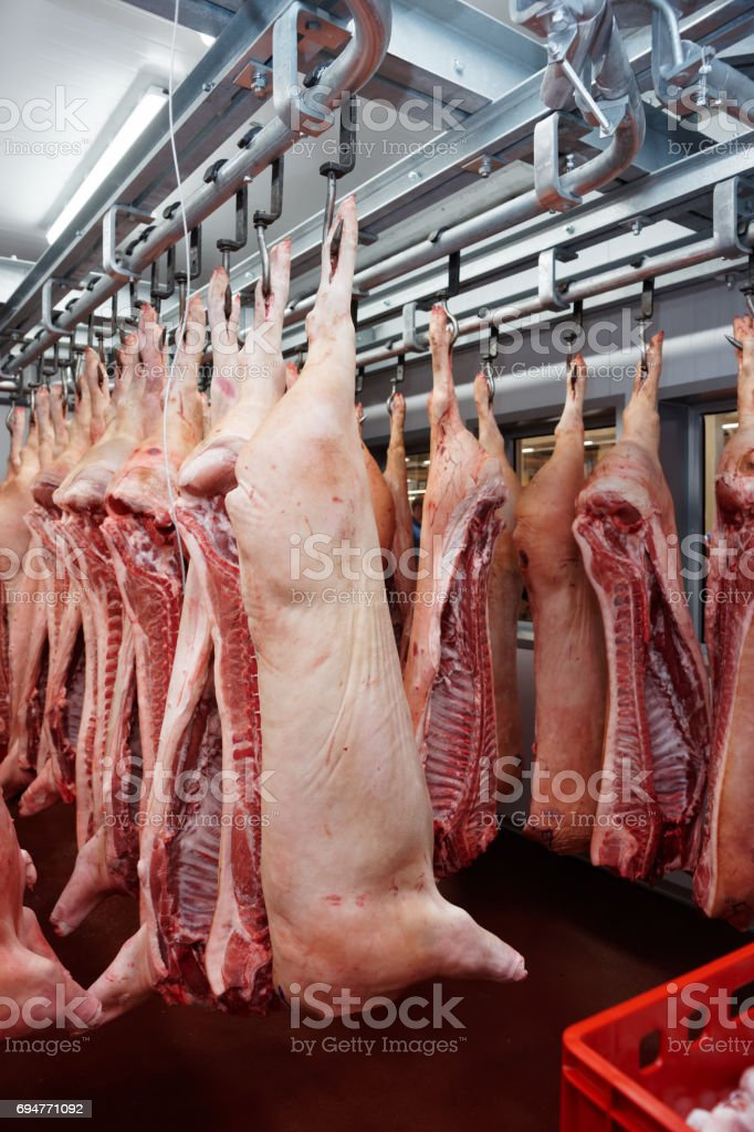 Pig carcasses cut in half in slaughterhouse stock photo