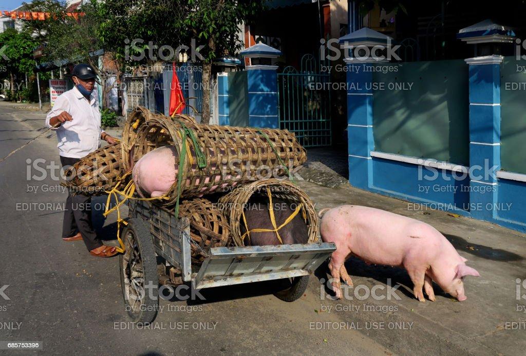 pig delivery zbiór zdjęć royalty-free