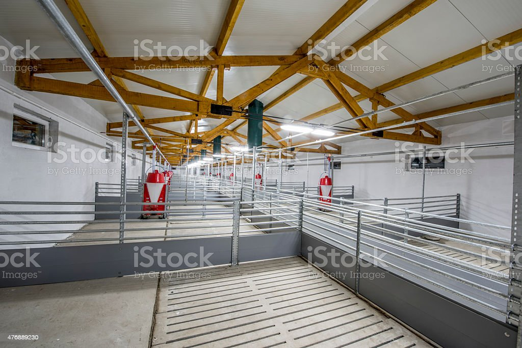 Pig Farm, Hog Farm stock photo