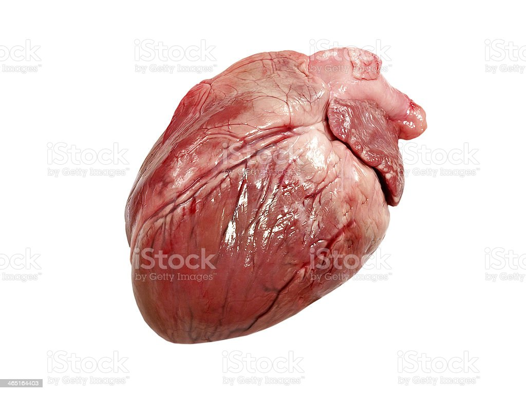Pig heart isolated. stock photo