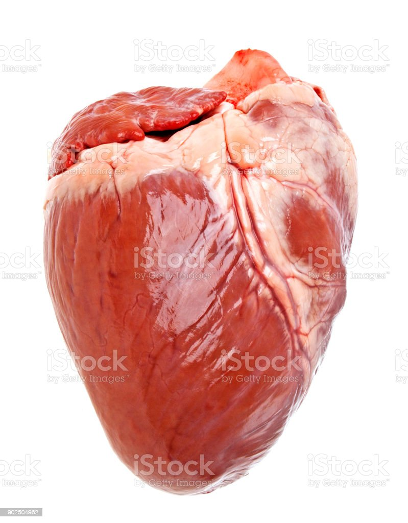 Pig heart on a white background stock photo