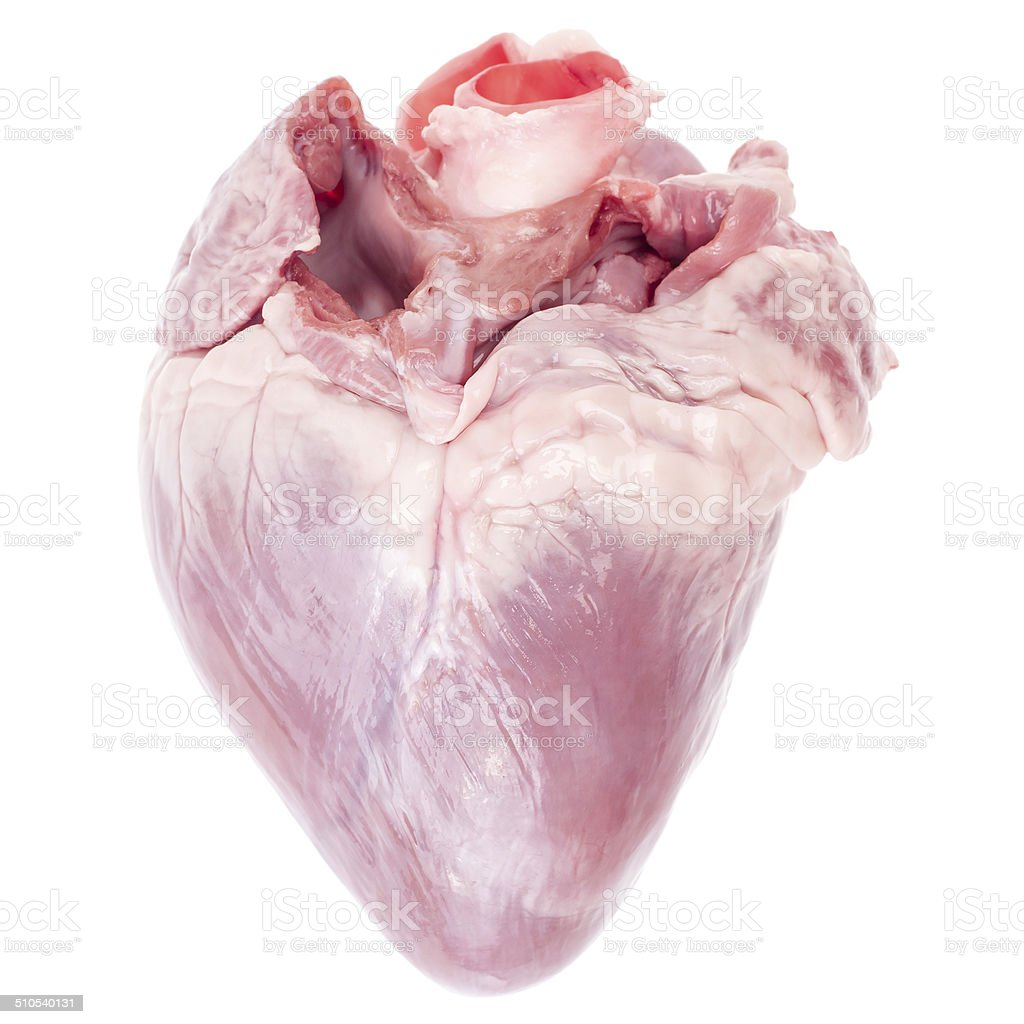 Porco coração - foto de acervo